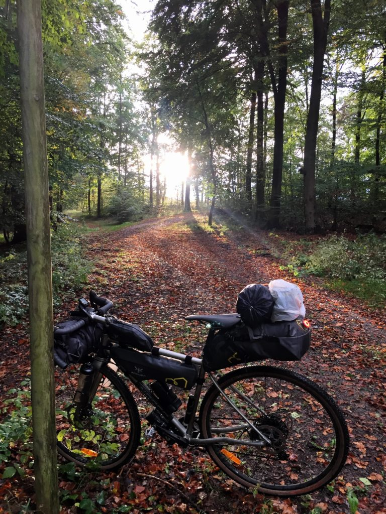 Gravel Bike im sonnigen Wald