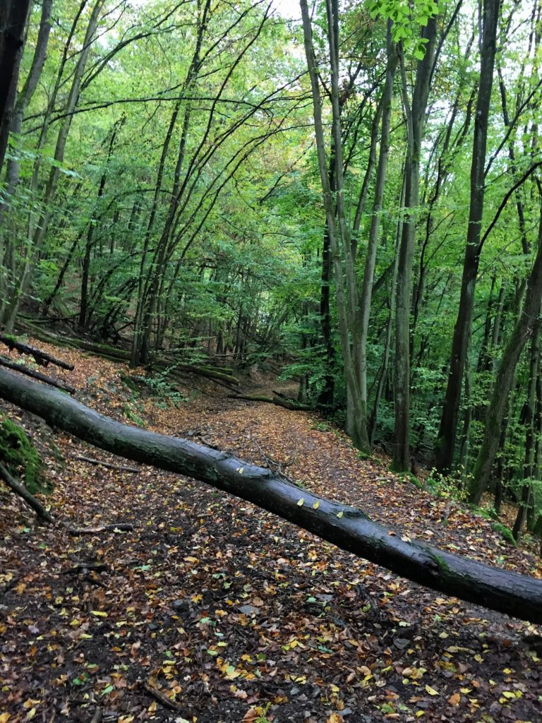 Hike-a-Bike dank umgefallener Bäume