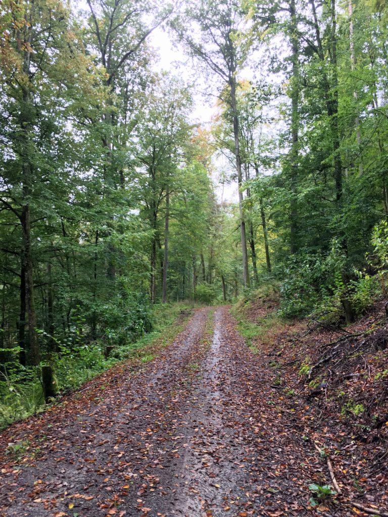 Gravel Route auf Waldweg