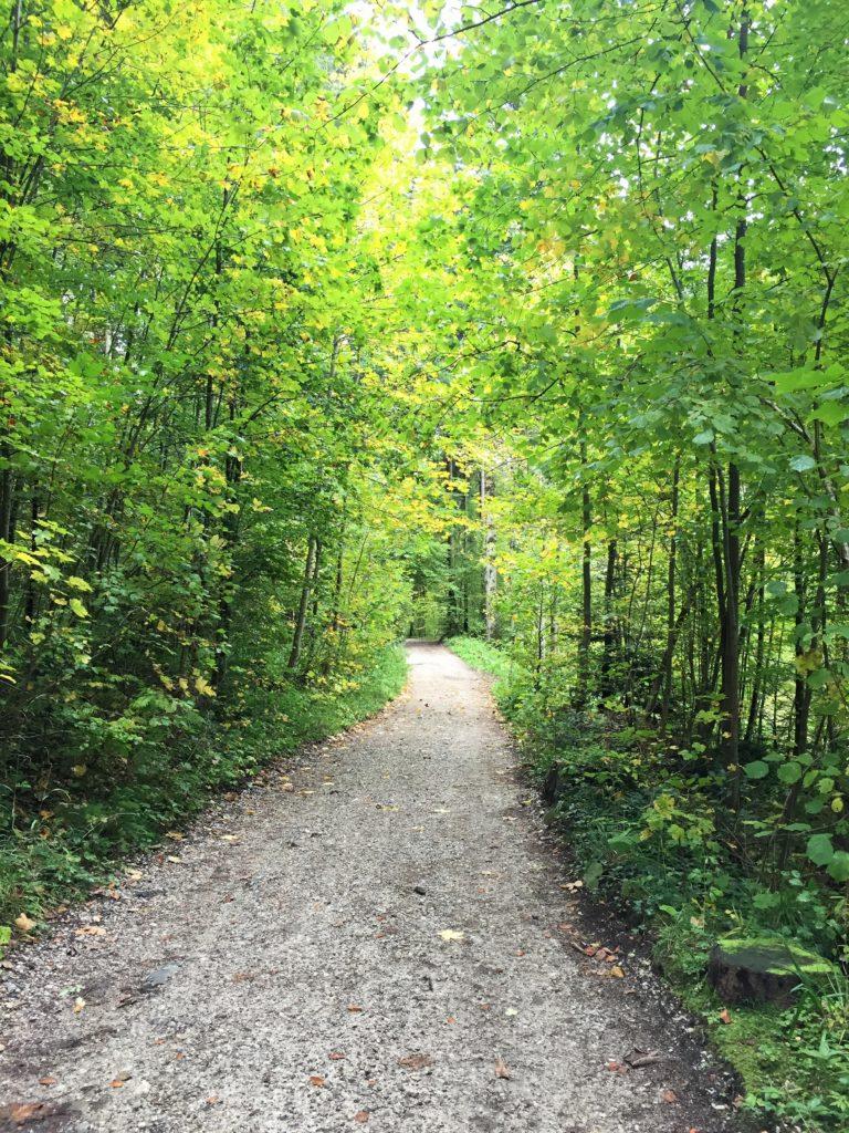 Bikepacking Navigation im Wald