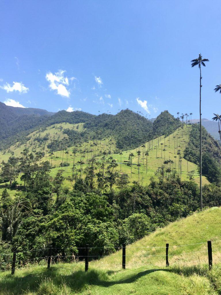 Valle de Cocora mit Wachspalmen