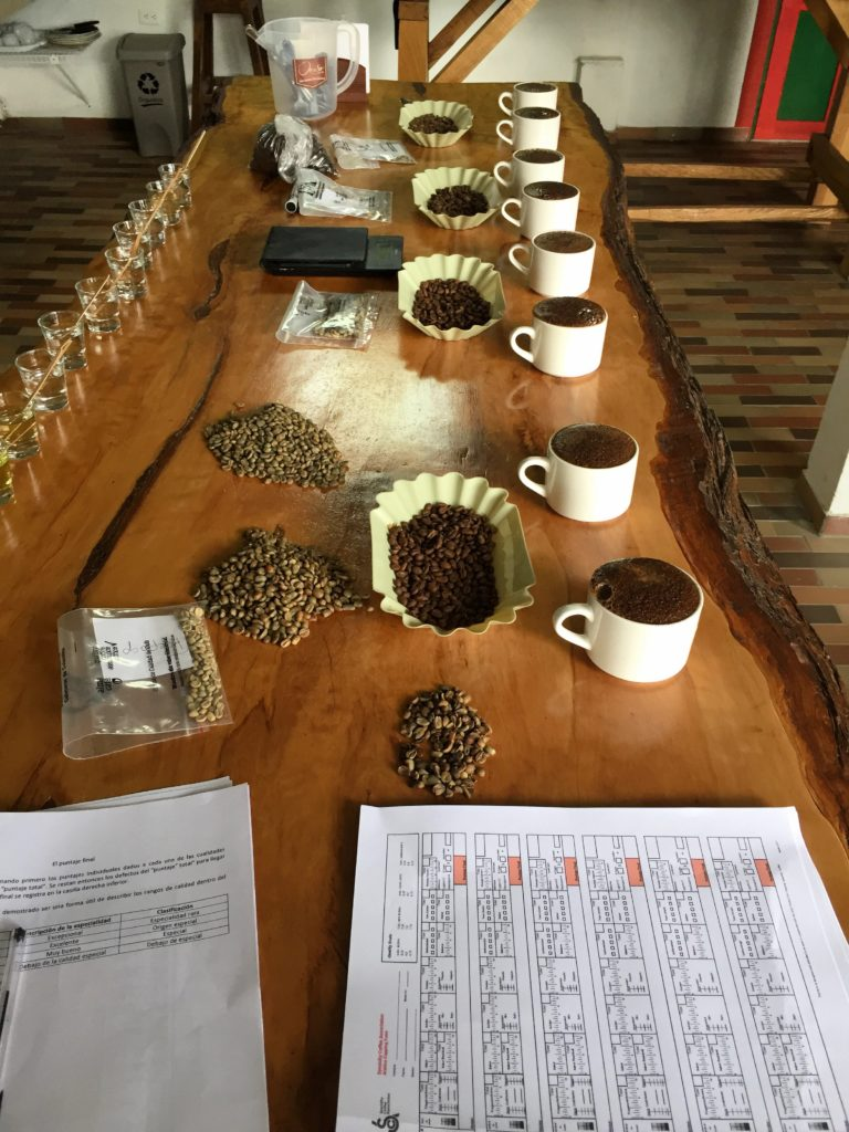 Kaffee-Sensorik während des Röstkurses