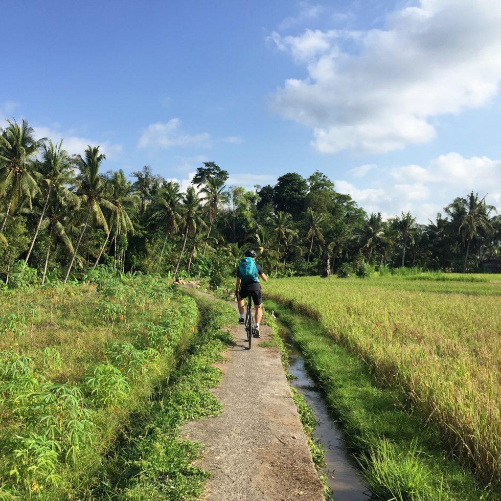 Rennrad fahren in Bali zwischen Reisfeldern